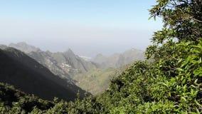 Alberi del relitto nel parco naturale di Anaga, Tenerife, isole Canarie Alberi coperti di muschio, alta umidità Foreste antiche i archivi video