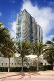 alberi del sud di alto aumento della palma delle costruzioni della spiaggia Immagini Stock Libere da Diritti