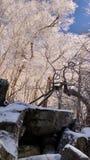 Alberi del Tennessee Fotografia Stock Libera da Diritti