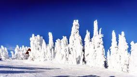 alberi del tipo di fantasma nell'alto alpino Fotografie Stock Libere da Diritti