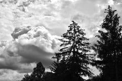 Alberi dell'abete rosso profilati dalle nuvole scure minacciose Immagine Stock