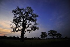 Alberi dell'albero dell'albero Fotografie Stock
