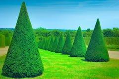 alberi dell'ars topiaria Immagini Stock