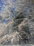 Alberi dell'inverno immagini stock