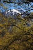 Alberi della depressione delle montagne. Stepantsminda. Georgia. Fotografia Stock Libera da Diritti