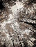 Alberi della foresta autunnale come fondo della natura fotografia stock