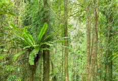 Alberi della foresta pluviale Immagine Stock Libera da Diritti