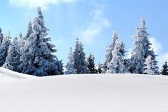 Alberi della montagna della neve Immagini Stock Libere da Diritti