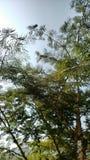 Alberi della natura Immagini Stock