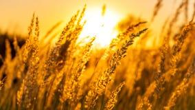 Alberi della natura di tramonto di estate di Goden immagine stock libera da diritti