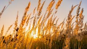 Alberi della natura di tramonto di estate di Goden fotografie stock libere da diritti
