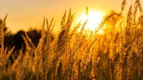 Alberi della natura di tramonto di estate di Goden fotografie stock