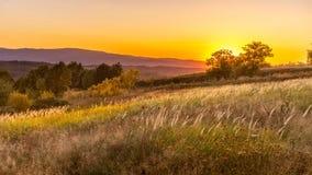 Alberi della natura di tramonto di estate di Goden immagini stock libere da diritti