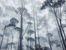 Alberi della nebbia della natura Fotografia Stock Libera da Diritti