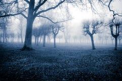 Alberi della nebbia di novembre Fotografie Stock Libere da Diritti