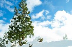 Alberi della neve immagine stock