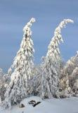 Alberi della neve della montagna Immagine Stock