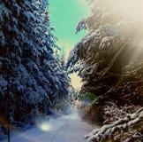 Alberi della neve di inverno Immagine Stock