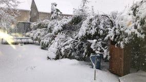 Alberi della neve di inverno immagini stock libere da diritti