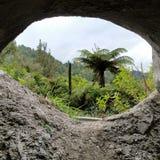 Alberi della Nuova Zelanda attraverso l'entrata della caverna Fotografia Stock