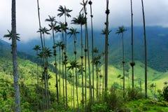 Alberi della palma da cera fotografia stock libera da diritti