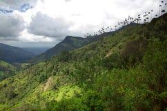 Alberi della palma da cera in valle di Cocora Immagine Stock