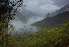 Alberi della palma da cera in valle di Cocora Fotografia Stock Libera da Diritti