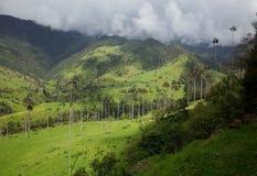 Alberi della palma da cera in valle di Cocora Fotografia Stock