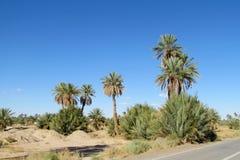 Alberi della palma da datteri vicino alla strada asfaltata Immagini Stock