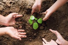 alberi della pianta di aiuto del gruppo della mano della gente da contribuire a ridurre globale Fotografia Stock Libera da Diritti
