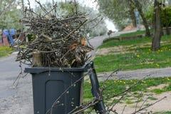 Alberi della potatura taglio degli alcuni rami dall'albero al contenitore organico della composta immagine stock libera da diritti