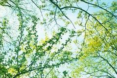 Alberi della primavera Fotografia Stock Libera da Diritti