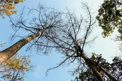 Alberi della primavera che si espandono per coprire la tonalità presa dalla vista dal basso dell'albero Fotografie Stock