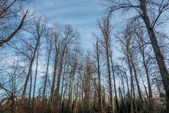 Alberi 2 della primavera di Seattle Fotografia Stock