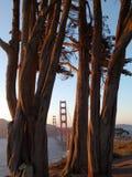 Alberi della sequoia Ponte di GoldenGate Fotografie Stock
