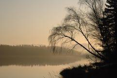 Alberi della siluetta dal lago alla luce di mattina Fotografia Stock Libera da Diritti