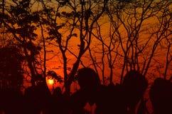 Alberi della siluetta del tramonto nella giungla Fotografia Stock