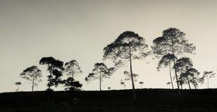 Alberi della siluetta nella collina Fotografie Stock