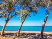 Alberi della spiaggia del mare Immagini Stock
