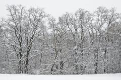 Alberi dello Snowy Fotografia Stock Libera da Diritti