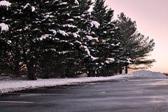 Alberi dello Snowy immagini stock libere da diritti