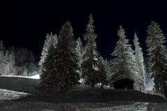 Alberi dello Snowy Fotografia Stock