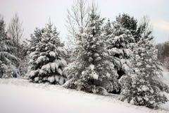 Alberi dello Snowy Immagine Stock