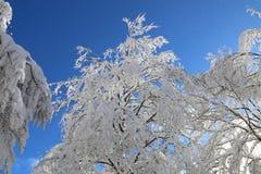Alberi dello Snowy Fotografie Stock