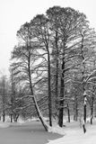 Alberi dello Snowy e lago congelato Immagine Stock