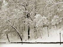 Alberi dello Snowy in inverno nella seppia Fotografie Stock Libere da Diritti