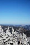 Alberi dello Snowy in montagne Immagine Stock Libera da Diritti