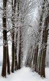 Alberi dello Snowy nella riga immagini stock
