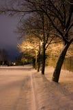 Alberi dello Snowy in una riga nel tema di inverno della sosta Immagine Stock