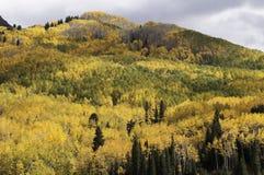 Alberi di Aspen dal passaggio di Kebler Fotografia Stock